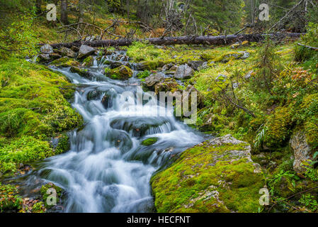 Small stream flowing in forest - Stock Image