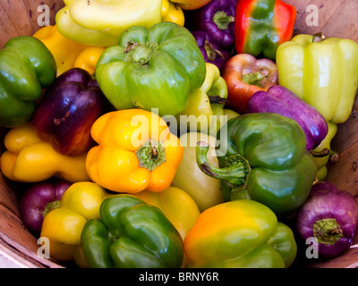 colorful bell peppers in a farm stand basket - Stock Image