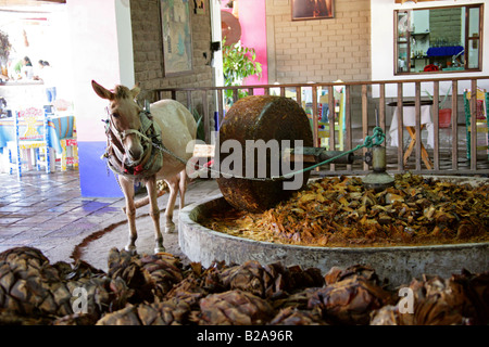 Mezcal Factory Nr Oaxaca, Mexico. Donkey Operating a Millstone to Crush the Cooked Agave Hearts. - Stock Image