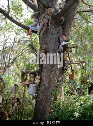 A Tree by the Side of the Canals of the Floating Gardens of Xochimilco Covered in Children's Dolls Xochimilco - Stock Image