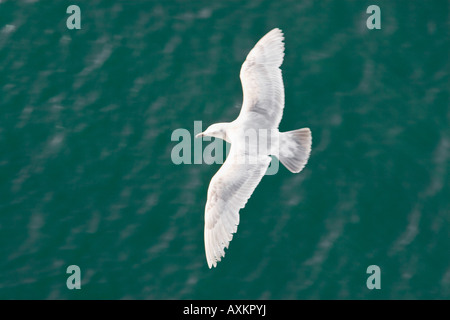 aerial image of one white seagull gliding over open water - Stock Image