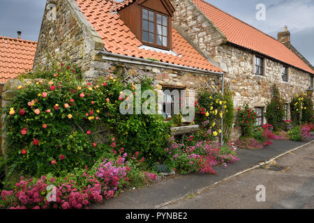 Stone house with red valerian and climbing roses in garden at Market Place Holy Island of Lindisfarne Northumberland England UK - Stock Image