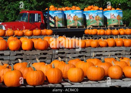 Pumpkins for Sale at Farm Concord Massachusetts - Stock Image