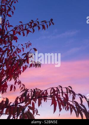 A Winter Cherry on an autumn sunrise. - Stock Image