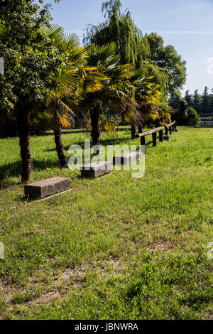 Row of colorful palms standing on the grass near stones and a fence in a sunny day - Stock Image