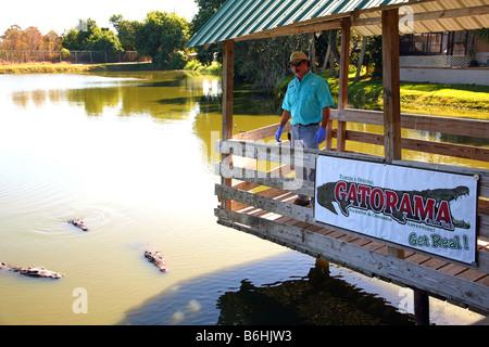 Alligator feeding time at Gatorama, Palmdale, FL, USA - Stock Image