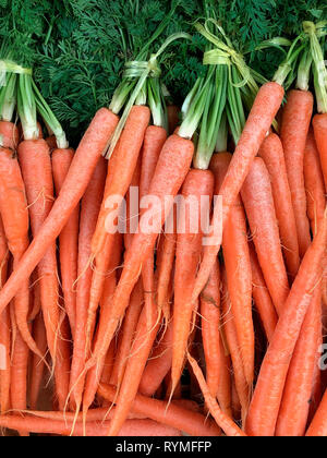 Organic carrots for sale at a farmers market - Stock Image