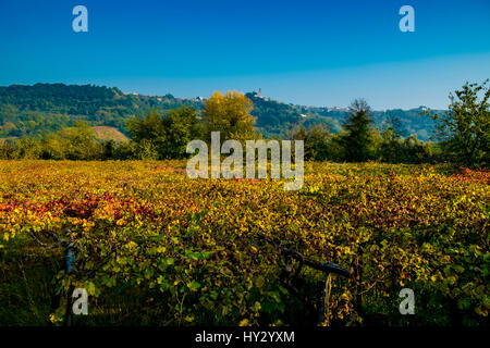 Scenic View Of Vineyard Against Clear Blue Sky - Stock Image