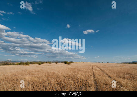 A rural country road with tire tracks in the grass leading to the horizon. - Stock Image