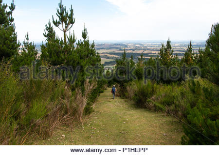 Walking trail at mt.Thomas Conservation Area - Stock Image