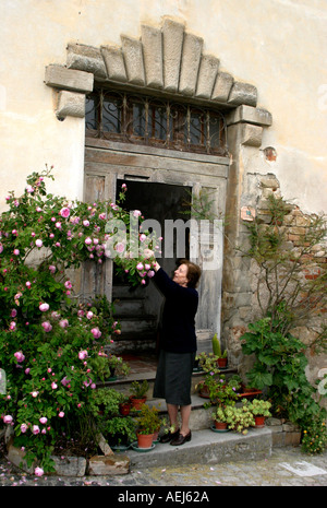 elderly resident admires the rouses around her door in Monte San Martino Le Marche Italy - Stock Image