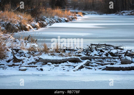 Beaver dam in winter across frozen stream in winter - Stock Image