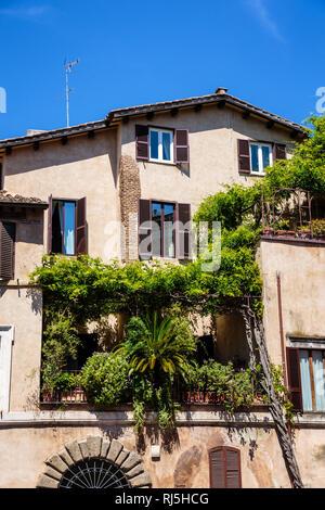 Europa, Italien, Latium, Rom, Üppig bewachsener Balkon eines Stadthauses in Rom - Stock Image