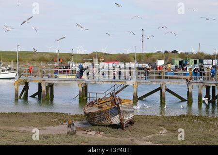 Rye, East Sussex, UK. 11th Apr, 2019. UK Weather: Sunny intervals with blustery winds on the Rye harbour nature reserve as a group of people and children feed the gulls on one of the docks of the river Rother. Credit: Paul Lawrenson 2019, Photo Credit: Paul Lawrenson/Alamy Live News - Stock Image
