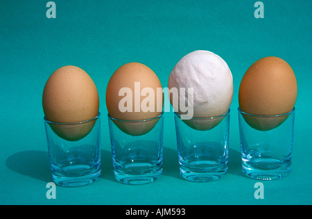 Hens eggs of different size Symbolic Some are bigger than most people - Stock Image