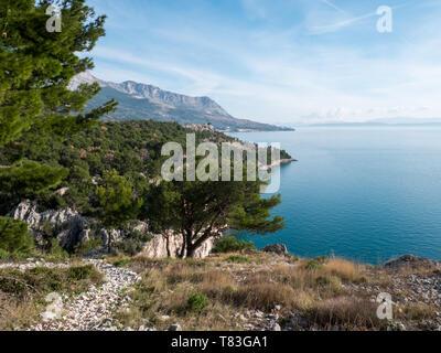 Pine tree forest over calm blue Adriatic sea in Croatia - Stock Image