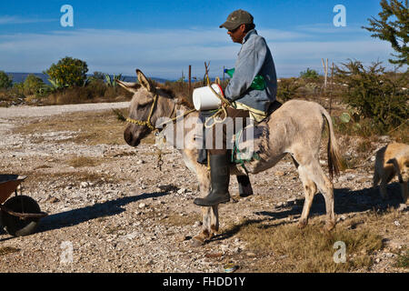 A man on a DONKEY in historic MINERAL DE POZOS which was once a large mining town - MEXICO - Stock Image