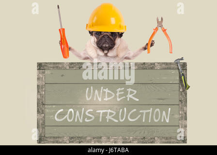 constructor pug dog holding pliers and screwdriver behind old wooden sign with text under construction, isolated - Stock Image
