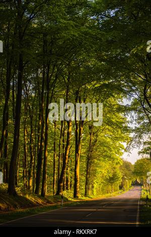 Road leaving the wood entering  the village of Westensee, Westensee, district of Rendsburg-Eckernförde, Schleswig-Holstein, Germany, Europe - Stock Image