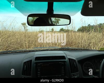Driving in a 4 wheel drive vehicle in tall speargrass in the Australian Outback near Kakadu National Park, Northern - Stock Image