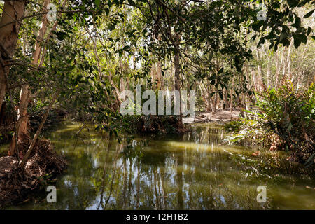View of the Lagoon at Hartley's Crocodile Adventures wildlife sanctuary, Captain Cook Highway, Wangetti, Queensland, Australia. - Stock Image