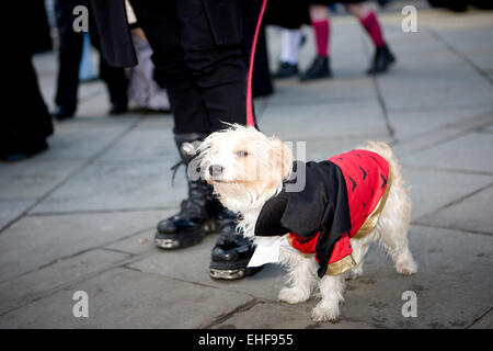 Goth dog at Whitby Goth Weekender. - Stock Image