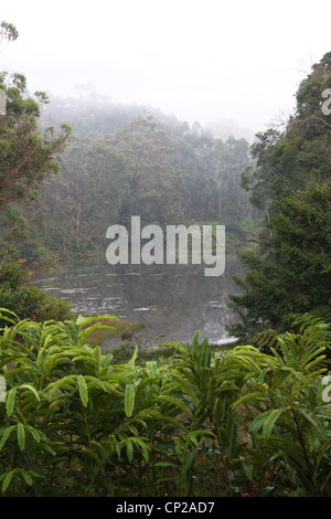 Andasibe Reserve, Madagascar, Africa. A misty morning view over a lake and the rain forest. - Stock Image