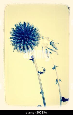 Autumn Seed Head - Stock Image