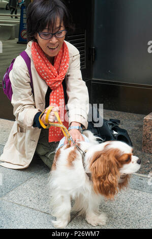 Japanese woman with her pampered Cavalier King Charles Spaniel, Tokyo - Stock Image
