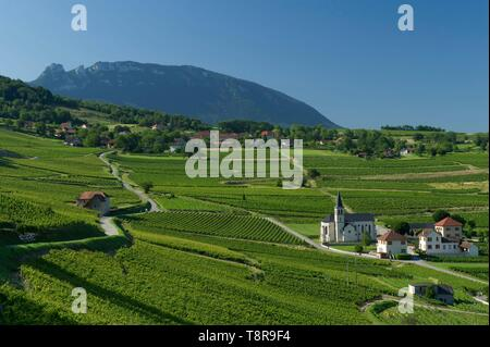 France, Savoie, before Savoyard country, the vineyards and the village of Jongieux and the tooth of the Cat - Stock Image