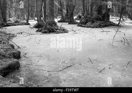 The frozen troll forest - Stock Image