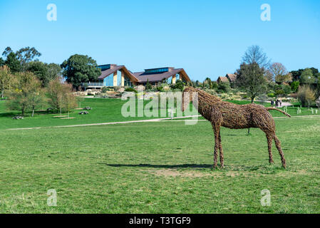 Royal Horticultural Society, RHS , Hyde Hall. Willow horse with learning centre and restaurant in background. - Stock Image