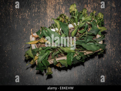 overhead view of wilted plant - Stock Image