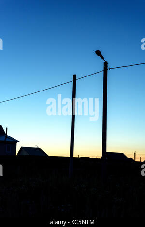 Single streetlight at dusk creating a silhouette against the blue tones of dusk - Stock Image