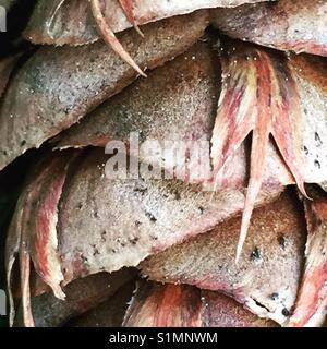 Macro of pine cone - Stock Image