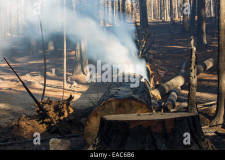 The King fire in the El Dorado National Forest, California, USA. - Stock Image