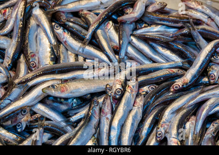 European Anchovies for sale fresh in Turkey - Stock Image