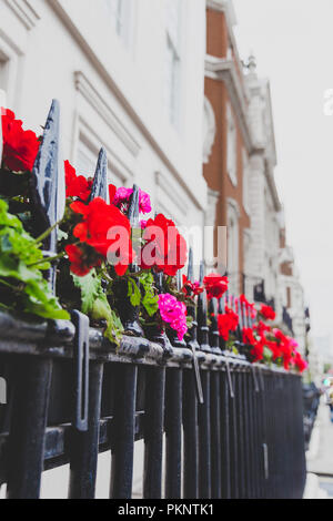 LONDON, UNITED KINGDOM - August 22nd, 2018: beautiful London fences with flowers and decor shot at shallow depth of field - Stock Image