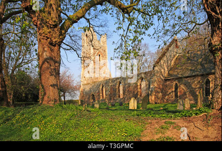 A view of the Church of SS Peter and Paul with ruined nave and tower at Tunstall, Norfolk, England, United Kingdom, Europe. - Stock Image