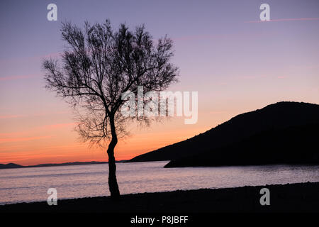 Single tree standing at the waters edge just after the sun setting, East Attica, Greece, Europe. - Stock Image