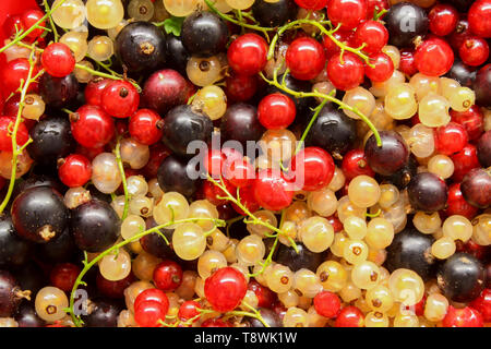 Ripe black, red and white currants in placer closeup as background - Stock Image