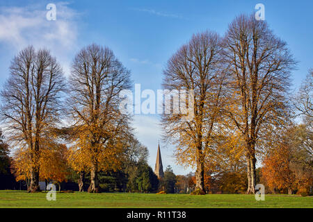 Autumnal Lime Trees on Denbies Estate with the spire of St Barnabas Church beyond. Ranmore Common, Surrey, England. - Stock Image