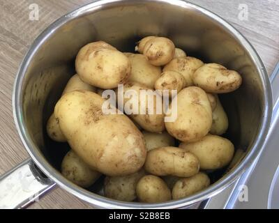 Home grown potatoes straight from the garden in a saucepan. - Stock Image