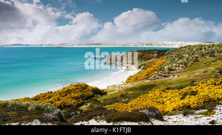Beautiful shoreline of Falkland Islands. White sand beaches and turquoise water of Gypsy Cove, a land mine area. East Falkland Island. - Stock Image