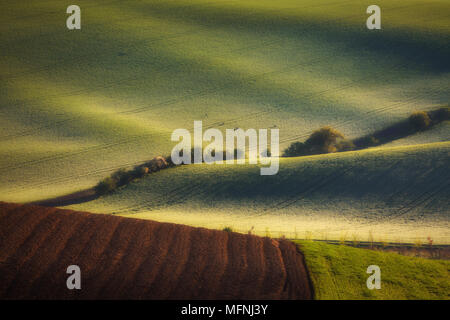sunrise lines and waves with trees in the spring, South Moravia, Czech Republic - Stock Image