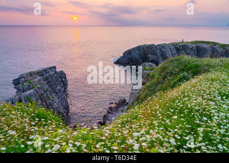 Spain, Cantabria, Castro-Urdiales, cove with wild flowers - Stock Image