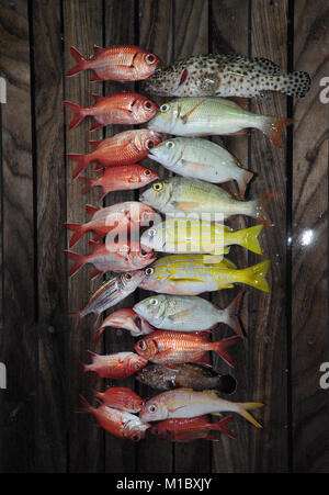 Many beautiful fish caught on the deck, Red Sea, Egypt - Stock Image