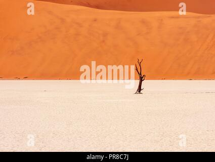 Stark contrasting landscape of a bright white clay pan leading to a large red sand dune, with one small tree skeleton in the distance. Deadvlei in the - Stock Image