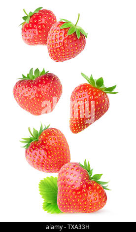 Isolated strawberries. Flying whole strawberry fruits isolated on white background with clipping path - Stock Image