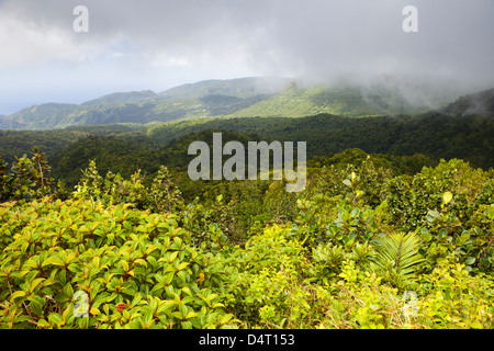 Morne Trois Pitons National Park on The Boiling Lake Hike, Dominica - Stock Image